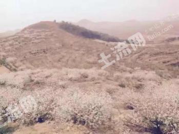 临沂平邑县35亩荒山已开发成耕地,适合种植或养殖,出租或出售
