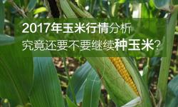 2017年玉米行情分析:究竟还要不要继续种玉米?