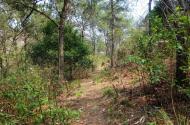 非农业户口能买农村山林并且过户林权证吗?