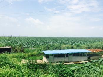 滁州明光市 3600亩 湖泊 转让